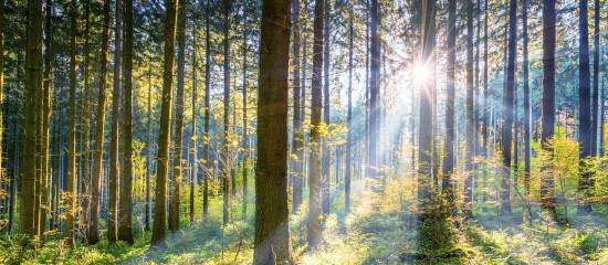 Les prix des forêts françaises flambent!