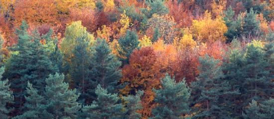 Les ventes de parcelles de forêts françaises se portent bien